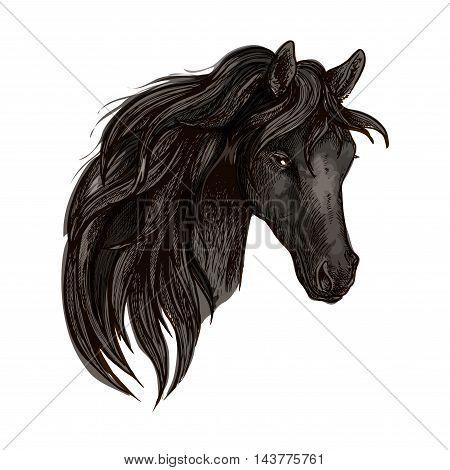 Black horse head. Watercolor brush sketch. Vector vintage artistic portrait of mustang with long mane