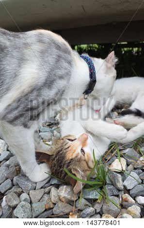 little baby cat with her mother