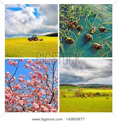 Collage of beautiful scenes in the spring