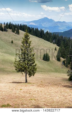 Lonely tree in forest - Great Fatra mountain range Slovakia