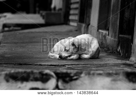 DOG ON FOCUS IN BLACK AND WHITE Street dog slepping. B&W photograph of a street dog.