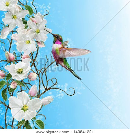 Floral background. White apple tree in bloom tracery weaving branches blue background small bird of the hummingbird.