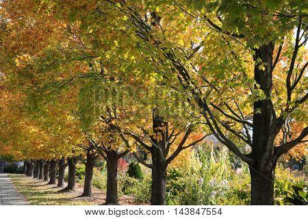 A Row Of Trees In Autumn Colors Ault Park Cincinnati Ohio