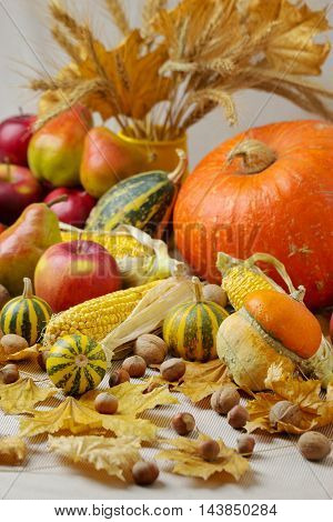 Autumn holiday Thanksgiving. Still life with pumpkin and apples pears and nuts cones and leaves.