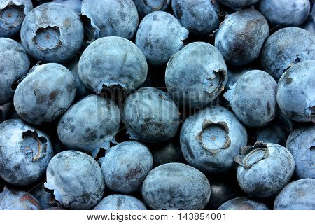 Blueberries, bog whortleberry, great bilberry organic food background