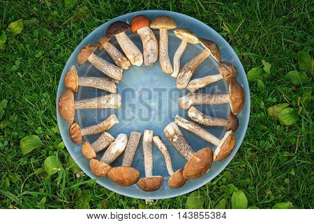 Brown Cap Boletus Lying All Around On A Tray In The Form Of Geometric Abstraction, In A Shape Of The