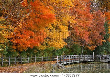 Trees Positively Ablaze With Color During Autumn In The Park Walking Path Fence And Pond Sharon Woods Southwestern Ohio