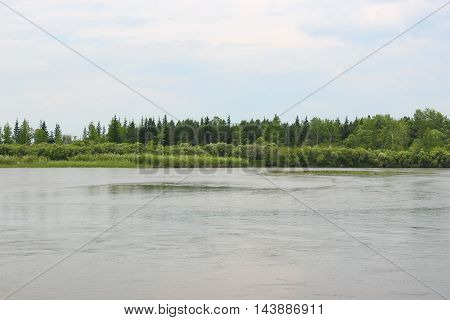 The island with the trees on the river