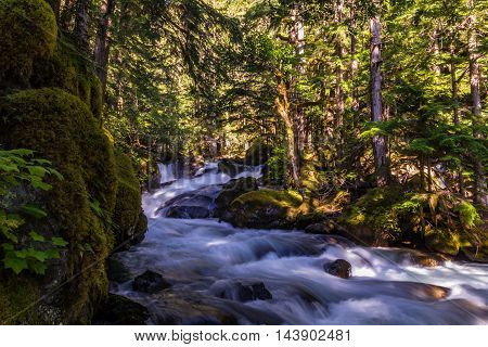 Beautiful small river in enchanted old forest