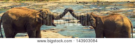 Elephants In The River Vintage Nature Background