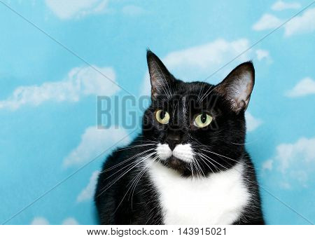 Black and white tuxedo tabby cat with green eyes close up blue background sky with white clouds. Cat crouched down looking to viewers left. Copy space