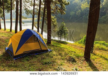 Camping in the forest pinePangung Forestry Plantations Maehongson Province North of Thailand