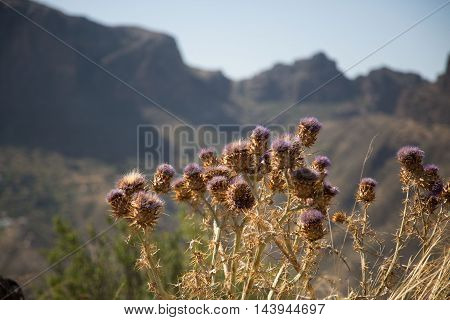 Typical landscape in Gran Canaria, landmark of Gran Canaria Roque Nublo