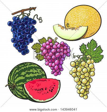 Collection of red, green and purple grapes, melon and watermelon, illustration isolated on white background. Set of fresh ripe grapes, whole and sliced melon watermelon, juicy summer fruits