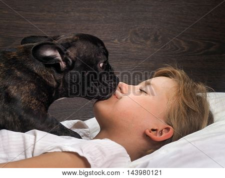 Dog and young girl face to face. Mistress sleeps Bulldog gently trying to wake her. The concept of animal and human relations good morning awakening