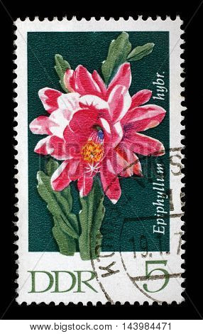 ZAGREB, CROATIA - JULY 02: a stamp printed in GDR shows Epiphyllum, Flowering Cactus Plant, circa 1970, on July 02, 2014, Zagreb, Croatia