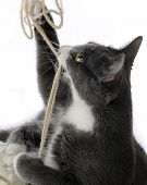 Closeup image of a frisky kitten playing with yarn. Motion blur on some string and kitty's paws. Isolated on white. poster