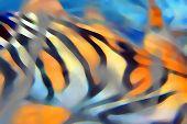 Digital abstract design of tiger skin poster