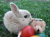 Easter Bunny With Bear Hamper And Colored Eggs In It On The Grass poster