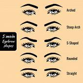 5 basic eyebrow shape types vector illustration. Fashion female brow poster