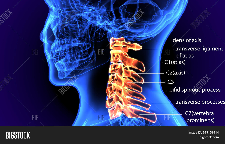 3d Illustration Image Photo Free Trial Bigstock