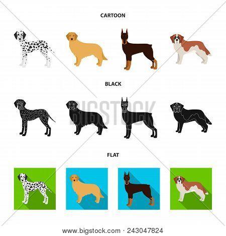 Dog Breeds Cartoon, Black, Flat Icons In Set Collection For Design.dog Pet Vector Symbol Stock  Illu