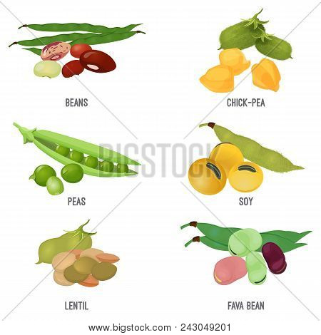 Beans Species Set, Healthy And Nutritious Natural Food. Chick-pea Seeds, Green Peas, Healthy Soy, Fr