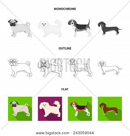 Dog Breeds Flat, Outline, Monochrome Icons In Set Collection For Design.dog Pet Vector Symbol Stock