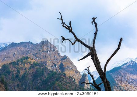 Gnarled Trunk Of A Tree Mountains In The Background.