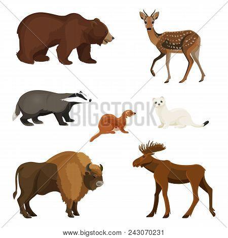 Forest Animals, Predators And Herbivores Set. Huge Bear, Young Deer, Grey Raccoon, Small Marten, Arc