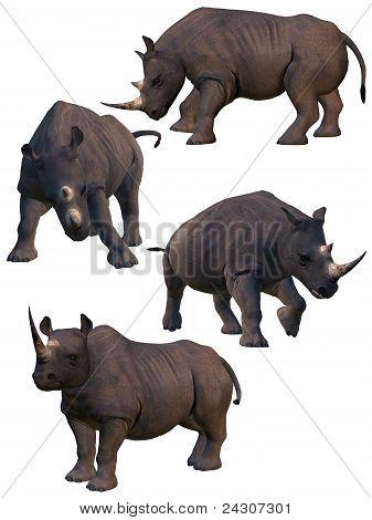 Set Of Four Rhinos.