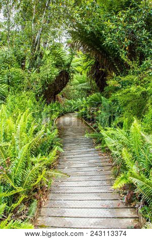 Boardwalk Leading Through Hastings Cave Nature Reserve Temperate Rainforest And River