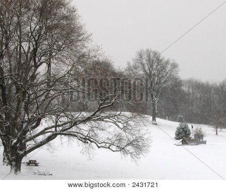Schenley Park In Snow