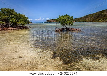 Mangroves in a bay on an island in BVI