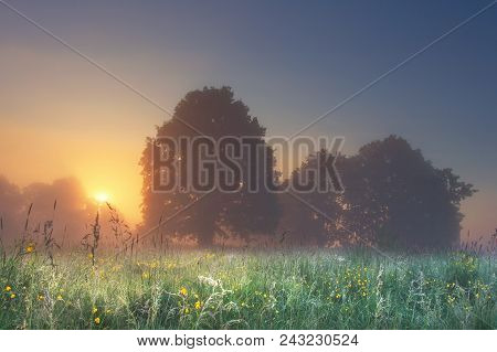 Amazing Perfect Landscape Of Summer Meadow With Trees In The Foggy Morning At Bright Sunrise With Wa