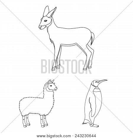 Different Animals Outline Icons In Set Collection For Design. Bird, Predator And Herbivore Vector Sy