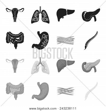 Intestines, Stomach, Muscles, Spine. Organs Set Collection Icons In Black, Monochrome Style Vector S