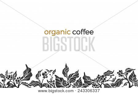 Trendy Vector Border With Elegant Coffee Branch, Leaf, Bean, Flower. Nature Template On White Backgr
