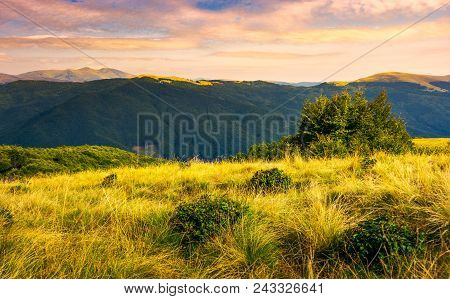 Grassy Meadows Of Svydovets Ridge At Sunset. Beautiful Landscape Of Carpathian Mountains Under The G