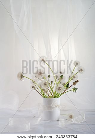 Stillife With Dandelions In A White Key
