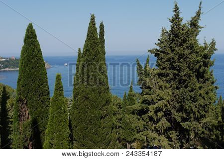 The Endless Blue Sea Is Visible Between The Tops Of Green Pines