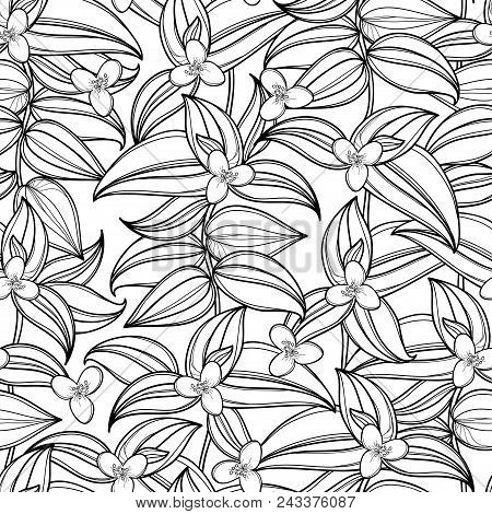 Vector Seamless Pattern With Outline Tradescantia Or Wandering Jew Flower And Ornate Leaf In Black O