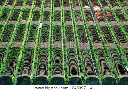 Green Moss And Algae On Slate Roof Tiles. Royalty-free Stock Photo Of Green Moss On Roof Tile Overgr
