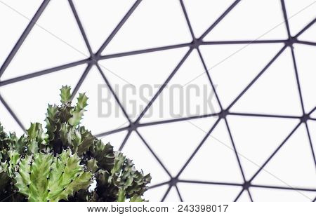 Close Up Of Green Agave Cactus In The Geodesic Dome Glasshouse
