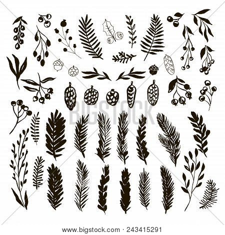 Set Of Hand Drawn Christmas Elements.hand Drawn Conifers: Fir, Larch, Juniper, Pine, Spruce  In Vect
