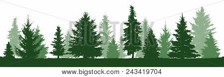 Coniferous Forest, Vector Silhouette. Trees Pine, Fir, Spruce, Christmas Tree. Isolated Trees On A W