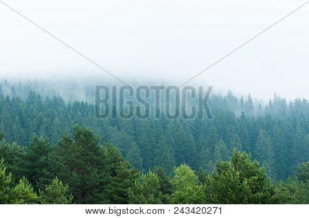 Smoking Blue Pine Woods After A Heavy Rainstorm In Romania, Transylvania.
