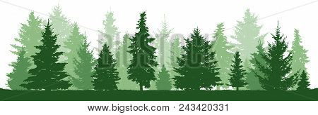 Trees Pine, Fir, Spruce, Christmas Tree. Coniferous Forest, Vector Silhouette. Evergreen Forest, Vec