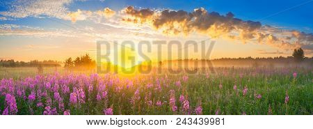 Beautiful Panorama Rural Landscape With Sunrise  And  Blossoming Meadow. Purple Flowers Flowering On