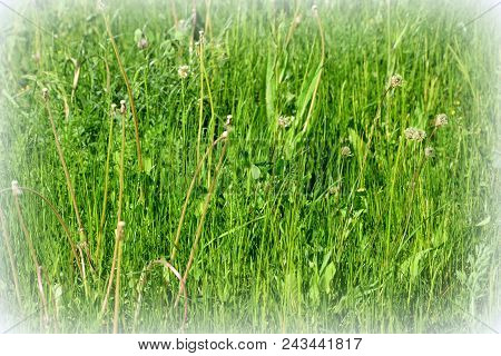 Background. Typical Rural Landscape In The Plains Of Transylvania, Romania. Green Landscape In The M
